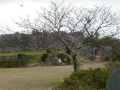 中城村城址公園の風景1